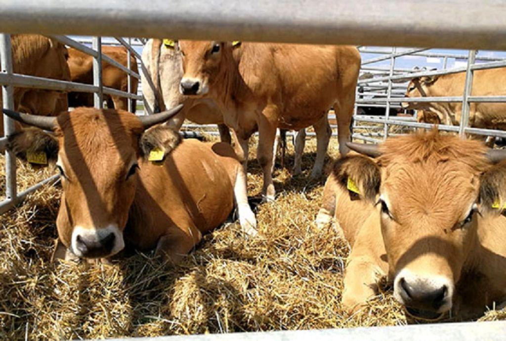 Pieno sektoriaus ateitis – kooperatyvai. Etaplius nuotr.