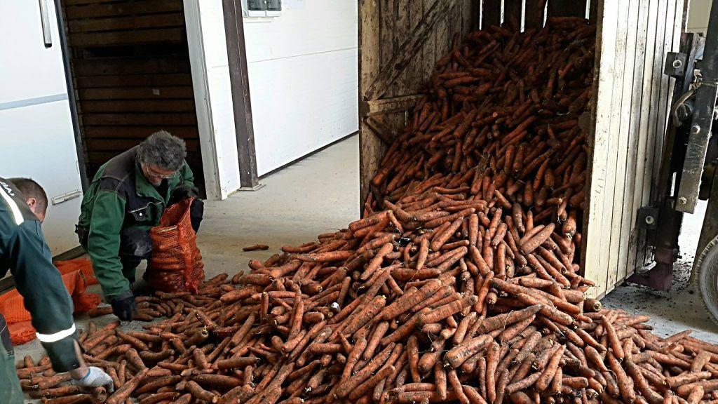 """ŽŪK """"Jakiškiai"""" augina ir tiekia rinkai įvairias daržoves. ŽŪK """"Jakiškiai"""" archyvo nuotr."""