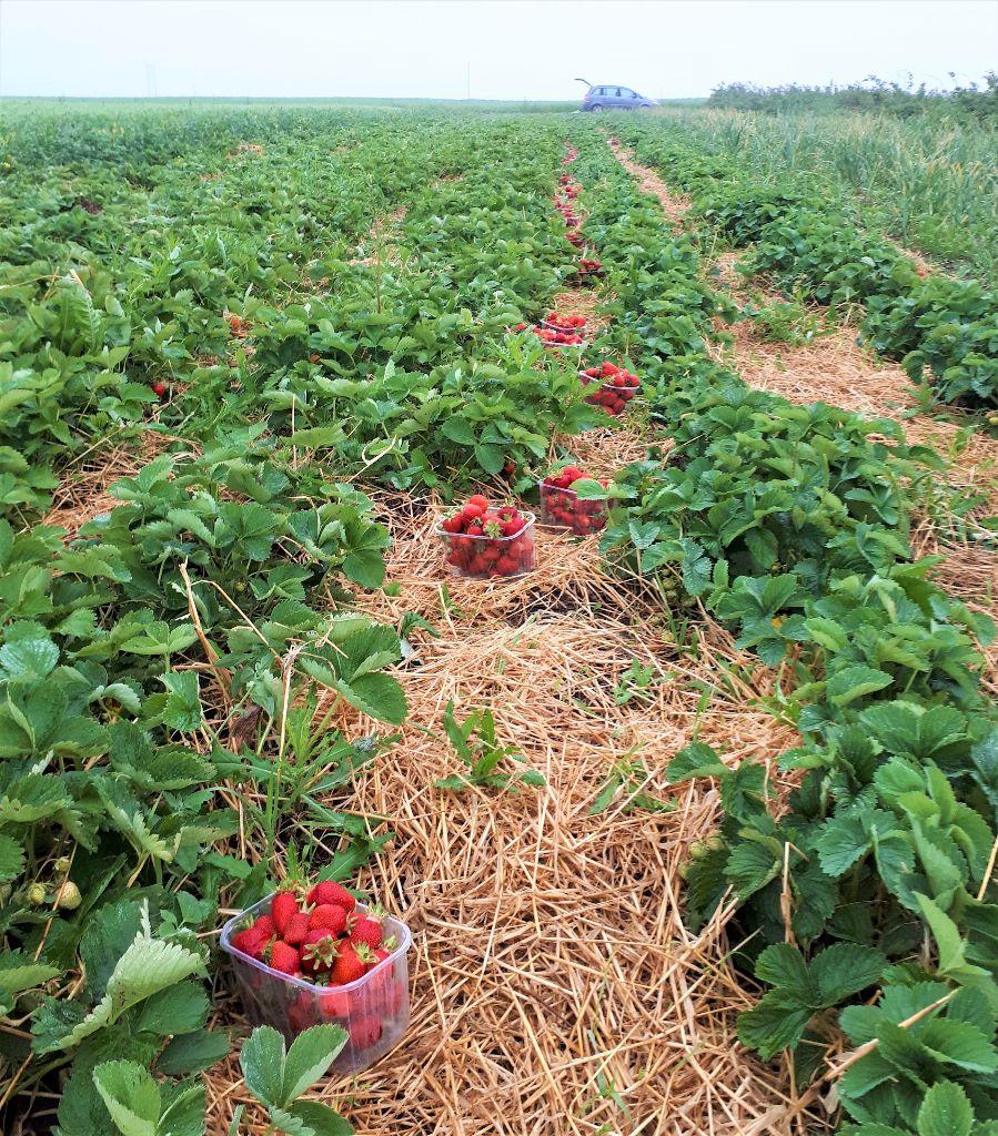 """""""Parama smulkiems ūkiams"""" suteikia galimybę palengvinti darbą ir padidinti produktyvumą. A. Karpinsko asmeninio archyvo nuotrauka"""